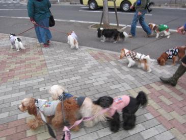 2010.12.2お散歩~
