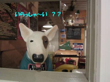 2010.12.2わんこ?