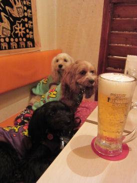 2010.12.5ビール~