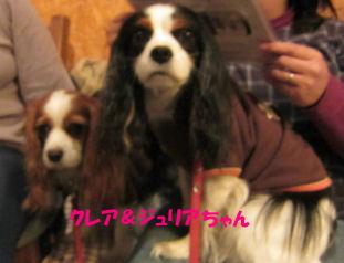 2010.12.7クレジュリちゃん