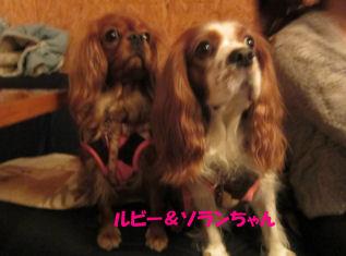 2010.12.7ソランルビーちゃん