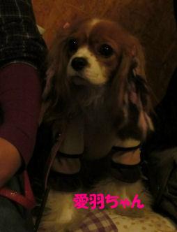 2010.12.7愛羽ちゃん