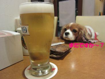 2010.12.8ビール