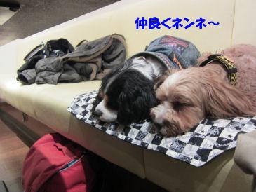 2010.12.8仲良く~ねんね