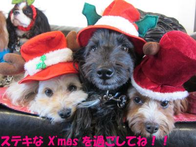 2010.12.24ステキなクリスマスを・・