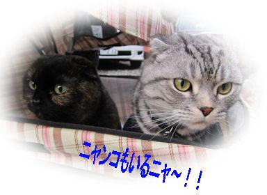 2010.12.30にやんこ