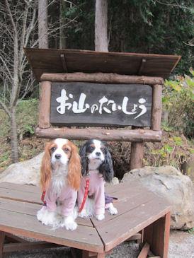 2010.12.30看板とくれじゅりちゃん