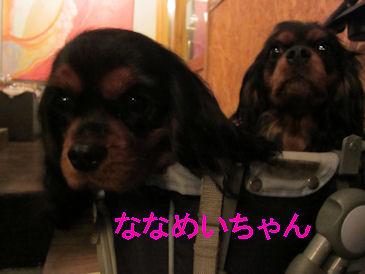 2010.12.31ななめいちゃん