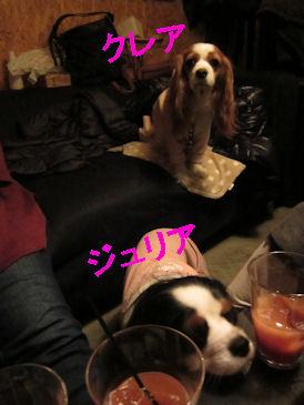 2010.12.31くれじゅりちゃん