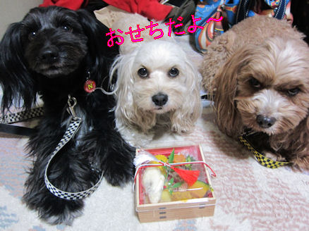 2011.1.1おせち