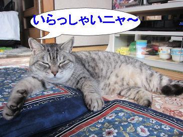 2011.1.1きーちゃん