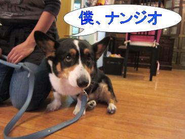 2011.1.4ナンジオさん