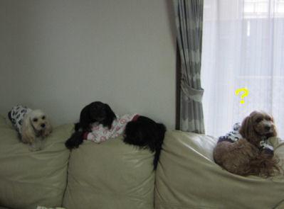 2011.1.16使い方が・・・・