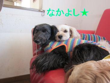2011.1.17仲良し~