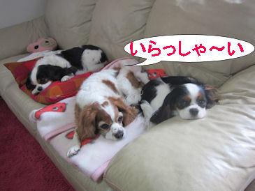 2011.2.6いらっしゃい~