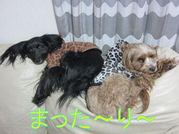 2011.2.6まった~り