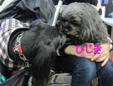 2011.2.11ひじき