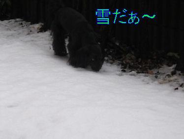 2011.2.15ゆきだ~