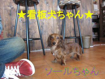 2011.2.26看板犬ちゃん