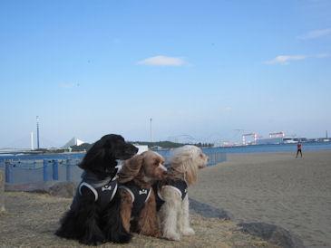 2011.2.27海風~
