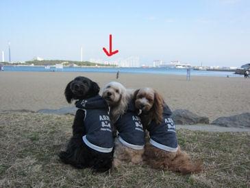2011.2.27八景島見える~