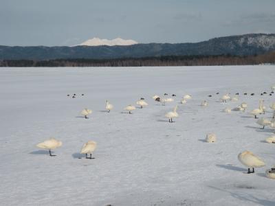 厚さ増す屈斜路湖の氷