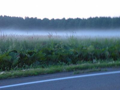 地をはう不思議な霧