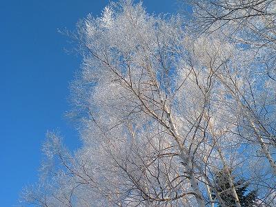 樹氷輝く!
