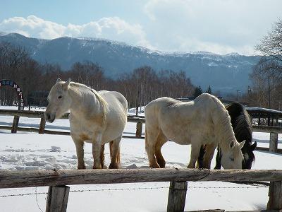 乗馬牧場の春