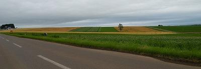 麦秋迎えた丘陵の畑
