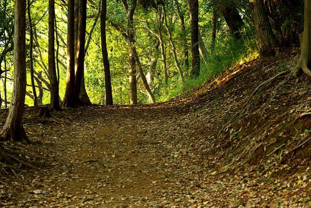 黄昏の丘03