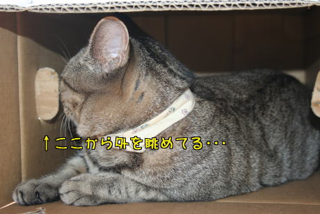 IMG_7040トラコ5