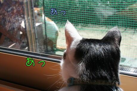 IMG_7561きじ7