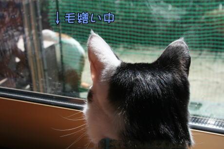 IMG_7560きじ6