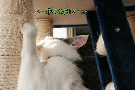 IMG_7652きじ1