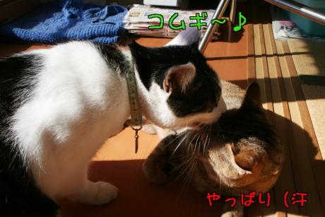 IMG_7700コムギ5