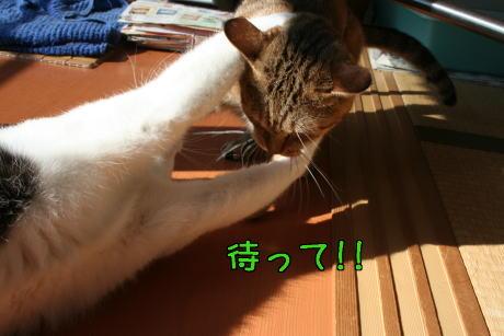 IMG_7702コムギ7