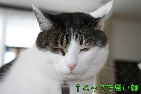 IMG_7870きじ6