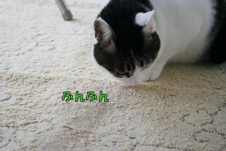 IMG_7885きじ1
