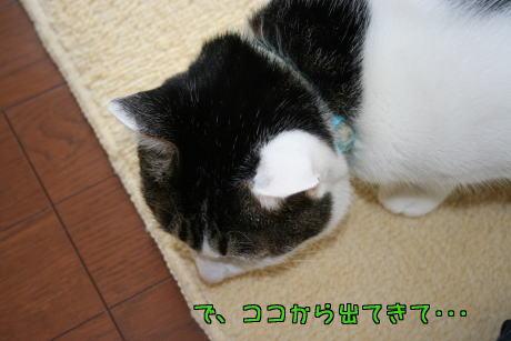 IMG_7888きじ3