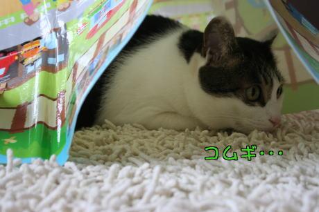 IMG_8961きじ3