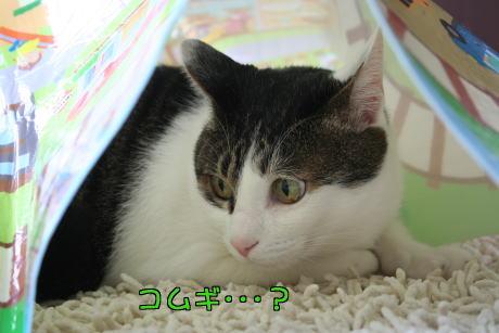 IMG_8964きじ4