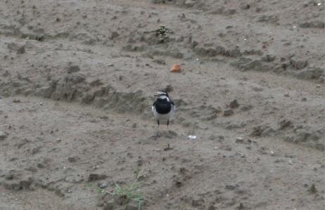 IMG_9411鳥2