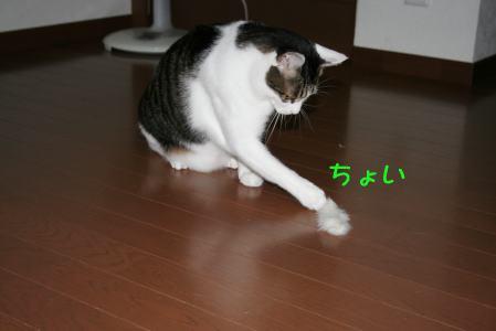 IMG_1267きじ2