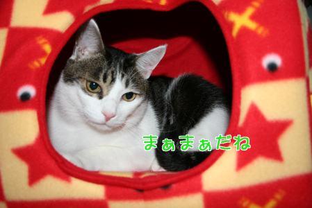 IMG_2199きじ8