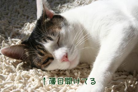 IMG_2316きじ3