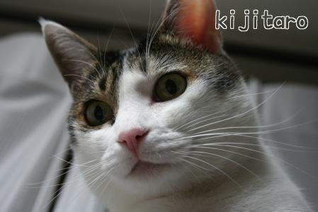 IMG_2183きじ6