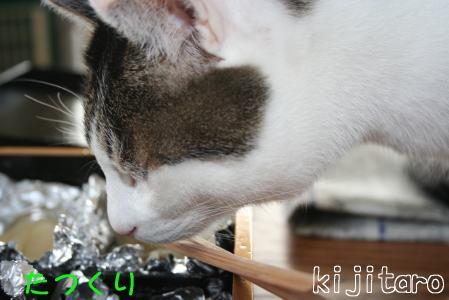 IMG_3021きじ3