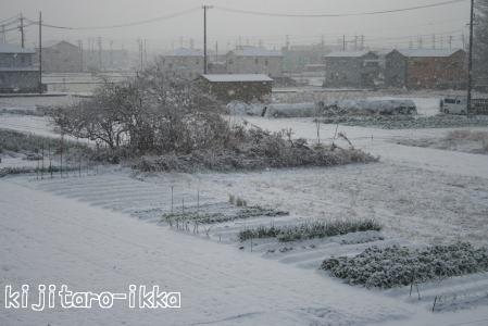IMG_2985雪1