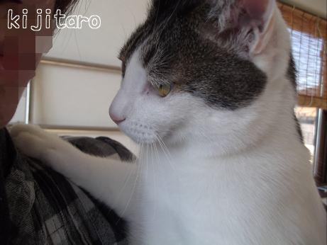 DSCF0079きじ4